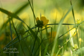 Summer flowers (40)