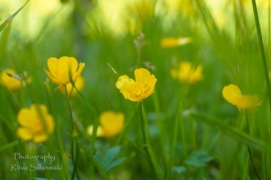 Summer flowers (41)