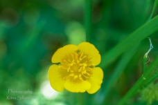 Summer flowers (42)