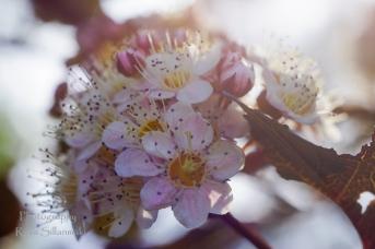 Summer flowers (5)