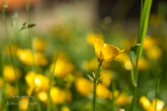 Summer flowers (51)