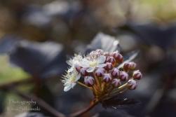 Summer flowers (6)