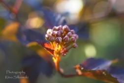 Summer flowers (8) – kopio