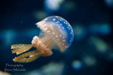 traslucent from Aquarium--10