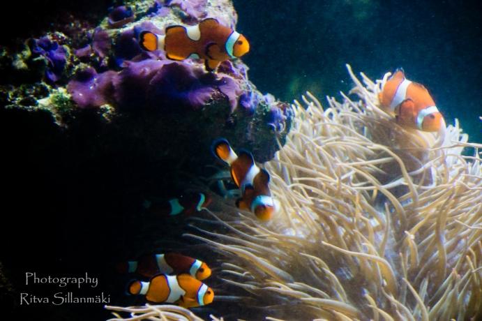 traslucent from Aquarium--12