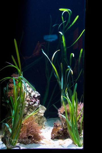 traslucent from Aquarium--14