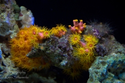 traslucent from Aquarium--16