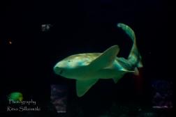 traslucent from Aquarium--18