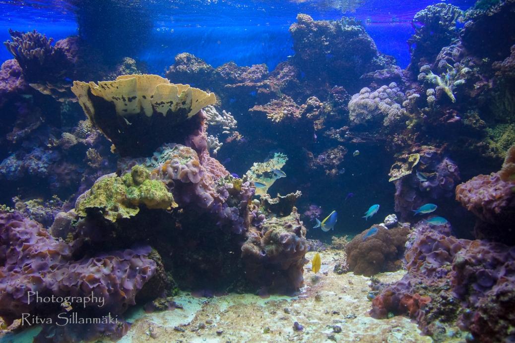 traslucent from Aquarium--19