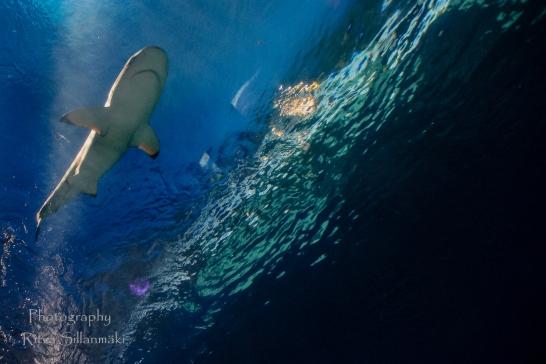 traslucent from Aquarium--20