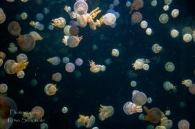 traslucent from Aquarium--6