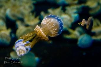 traslucent from Aquarium--8
