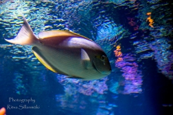 traslucent from Aquarium-