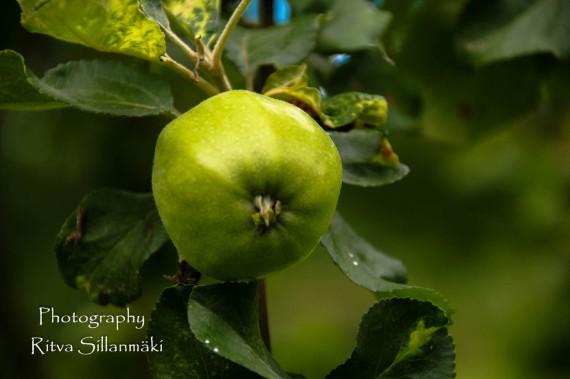 Apple (1)