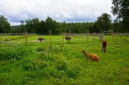 Kotieläinpuisto-14