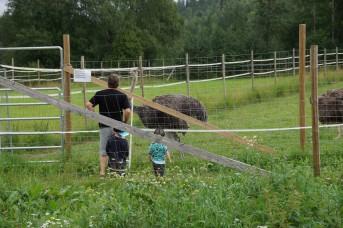 Kotieläinpuisto-15 – kopio