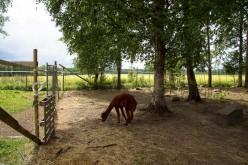 Kotieläinpuisto-47