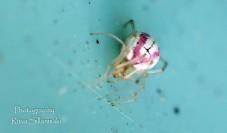 Little bugs-11