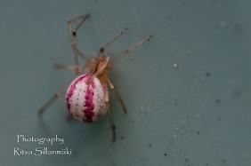 Little bugs-3
