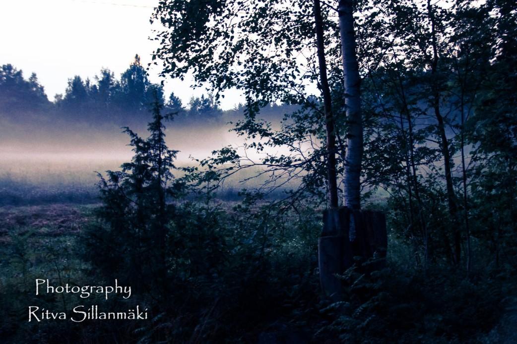 misty evening-14