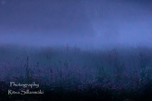 misty evening-16