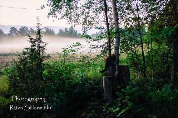 misty evening-21