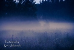 misty evening-26