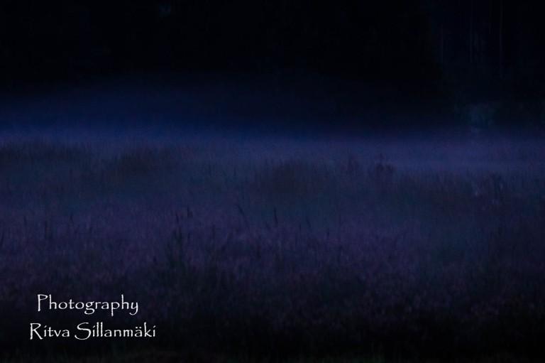 Misty evening-15