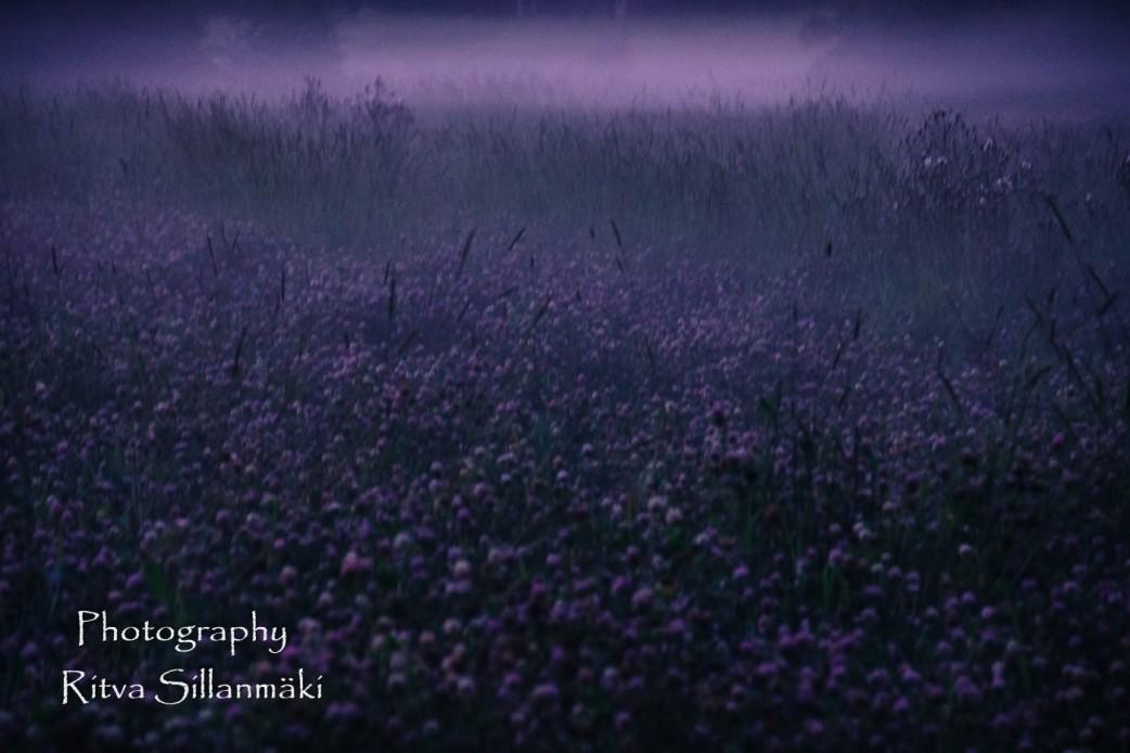Misty evening-18