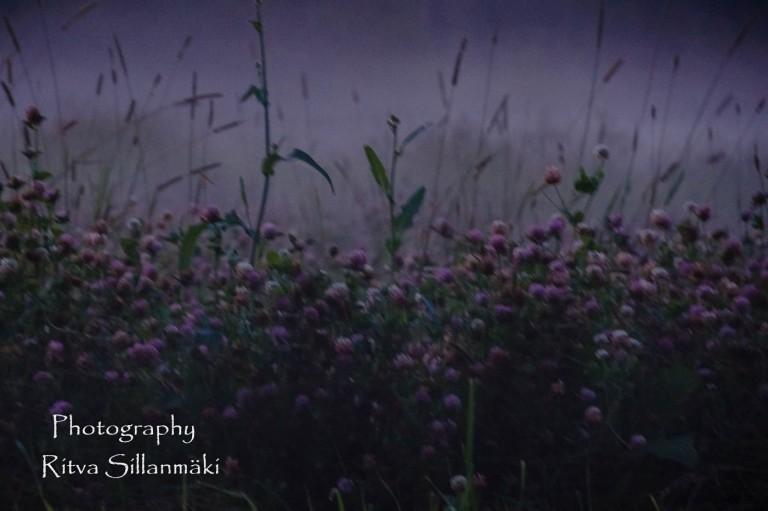 Misty evening-19