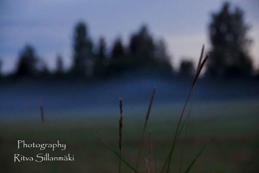 Misty evening-43