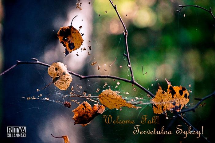 autumn-14-45-of-48