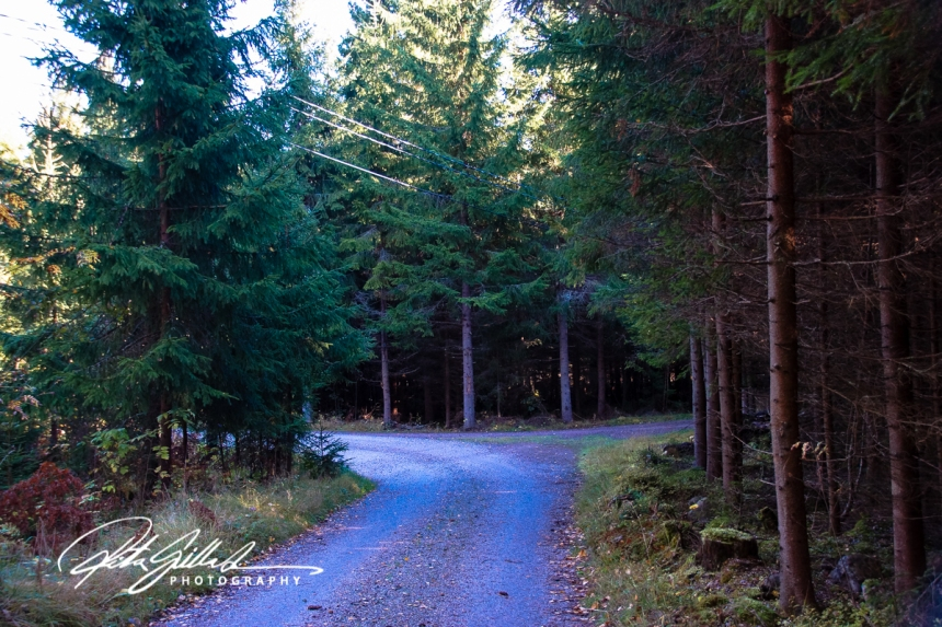 country roads in fall-1-2.jpg