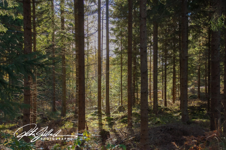 forest-5