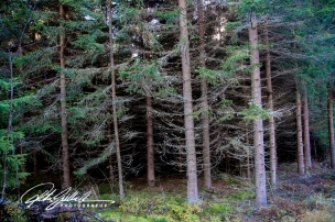 forest-8