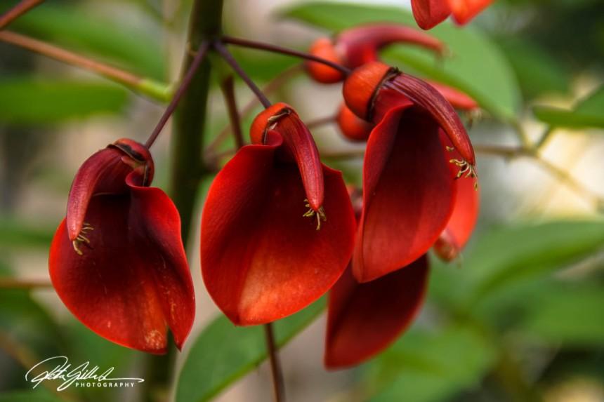 nice-flowers-19