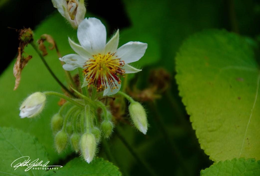 nice-flowers-2
