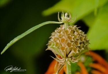 nice-flowers-4