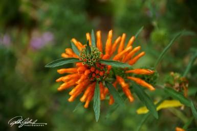 nice-flowers-6
