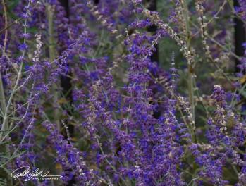 nice-flowers-8