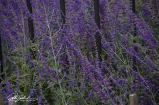 nice-flowers-9