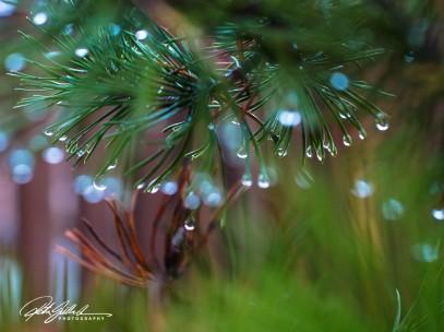 november-after-the-rain-18-kopio