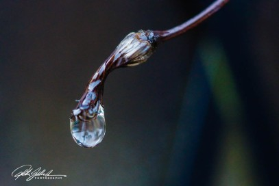 november-after-the-rain-2-kopio