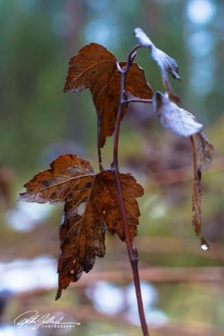 november-after-the-rain-22-kopio