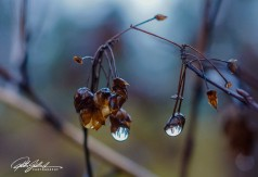 november-after-the-rain-25-kopio