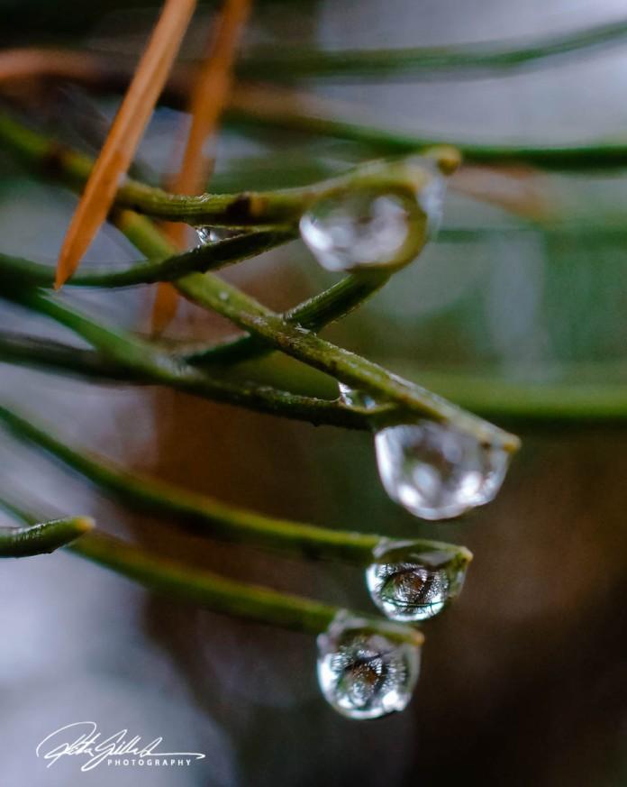 november-after-the-rain-31-kopio