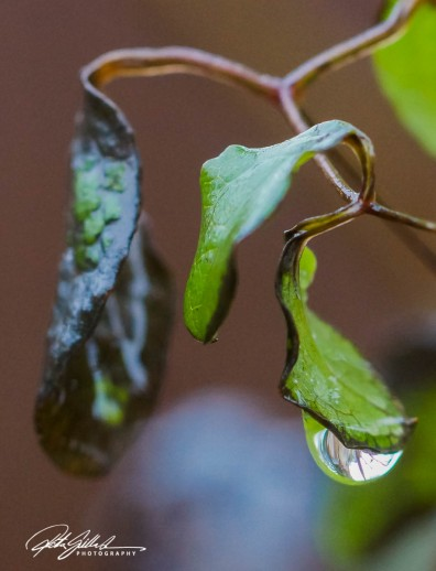 november-after-the-rain-4-kopio
