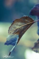 november_-57