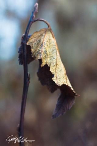 november_-63