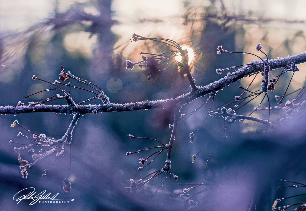 frosty-berries-2